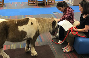 Miniature Horses Reading Time in Mrs. Rowan's Library