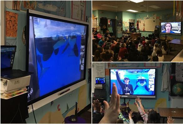 Wester Elem Sea World Chat