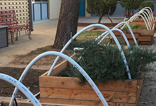 Estacado High School High School Garden Flourishing
